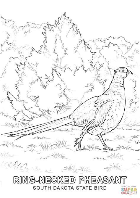 state bird of south dakota south dakota state bird coloring page free printable