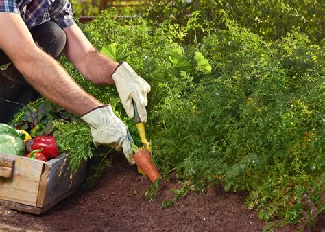 growing vegetable garden how to start your vegetable garden and grow your own