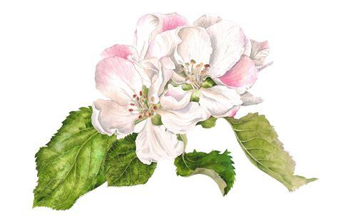 Free Home Design Uk large apple blossom helen campbell art