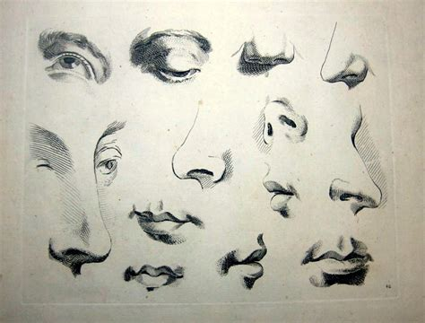 how to draw noses figure drawing how to draw nose ears and mouths