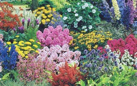 garden flowers perennials photograph express your nature
