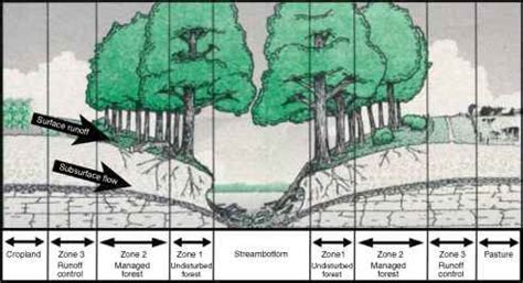 functions of riparian buffer zones population dynamics