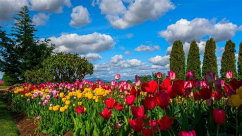 most beautiful flower garden most beautiful flowers wallpapers hd flowers wallpapers