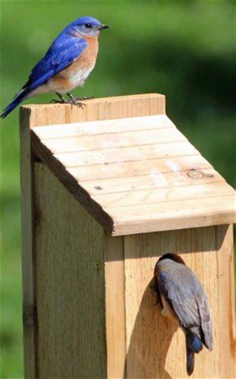 house wren birdhouse plans 25 best ideas about bird house plans on