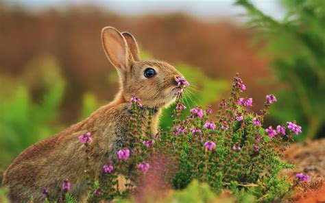 flower and bunny rabbit nose flowers wallpaper 1920x1200 14063