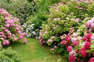 garden flower types why we just 4 species of flower in our gardens