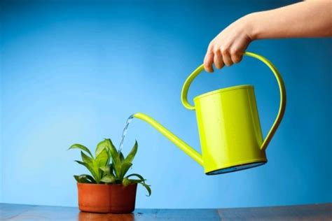 water for plants 7 easy ways to save water in your household inhabitat