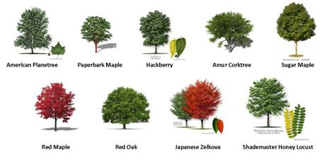 type of trees 55 trees types of trees patterns gardens