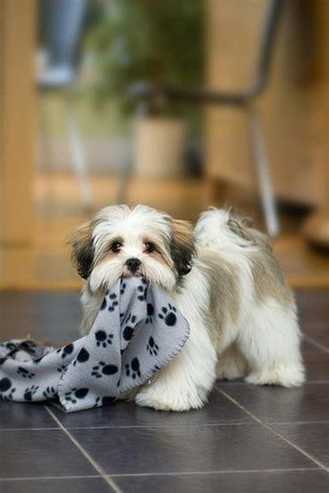 comment choisir chien nos conseilles en 45 photos