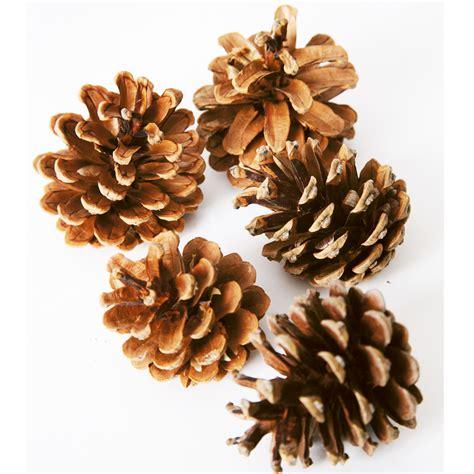 with pine cones buy pine cones tts