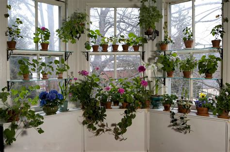 window gardens november giveaway 50 spending spree at logees