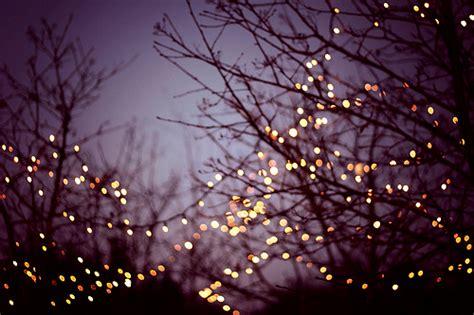 tree lights pictures lights trees image 336523 on favim
