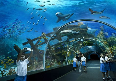 dome archives marine park an rwscoop