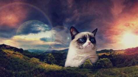 Cat Wallpaper by Grumpy Cat Wallpapers Hd 61 Images