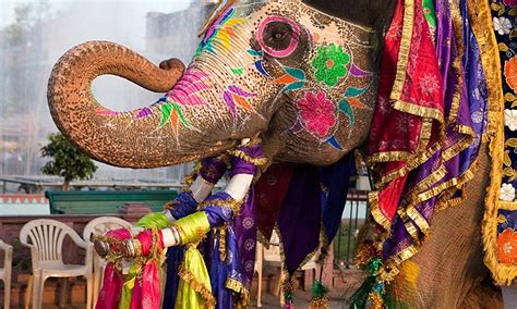 festival in india indian festivals to attend this summer while volunteering