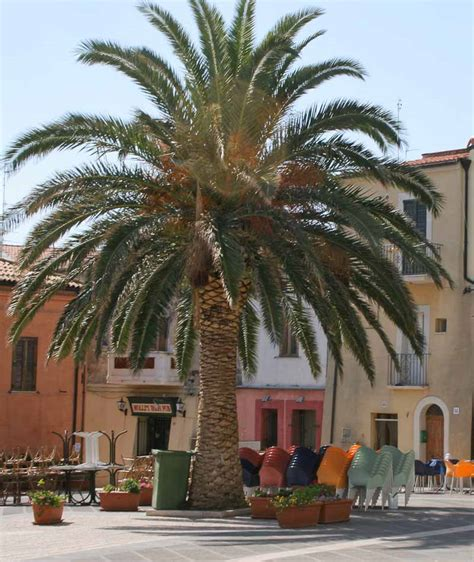 palm trees in italy a growing status symbol