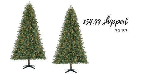 duncan fir tree 28 best duncan fir tree 7 tree