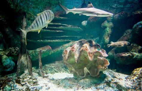 sealand aquarium office de tourisme de l 238 le noirmoutier