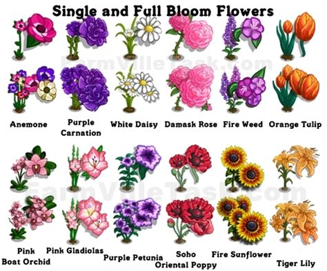 list of garden flowers with pictures bloom garden guide farmville task