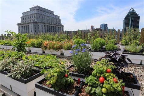 amazing vegetable gardens herb and vegetable garden gardensdecor
