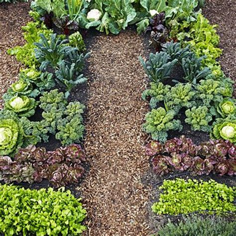 winter vegetable garden plants plant a cool season vegetable garden gardens vegetables