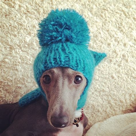 greyhound knitted hat pattern 1000 images about greyhounds in hats on