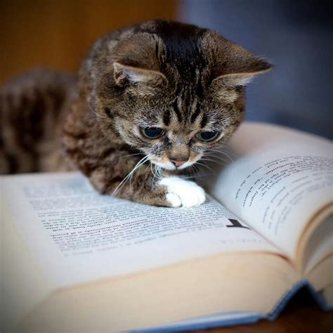 cat picture book smart cats never stop learning madly cats