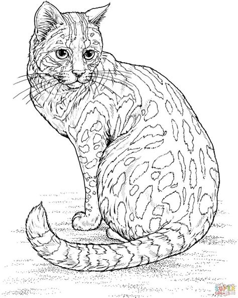 cat for adults 25 unique cat colors ideas on silver bengal