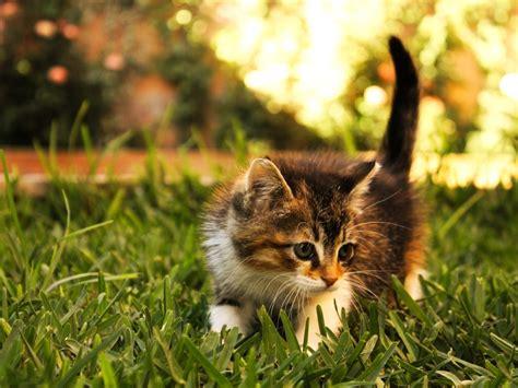 images cats cats hd wallpaper 1600x1200 12201