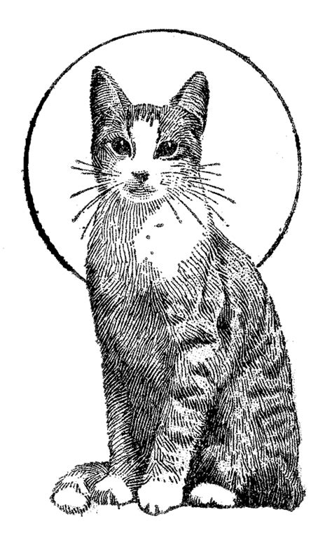 Cat Coloring Pages For Adults Bestofcoloring