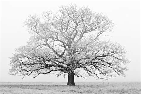 winter trees antje stik snijder column