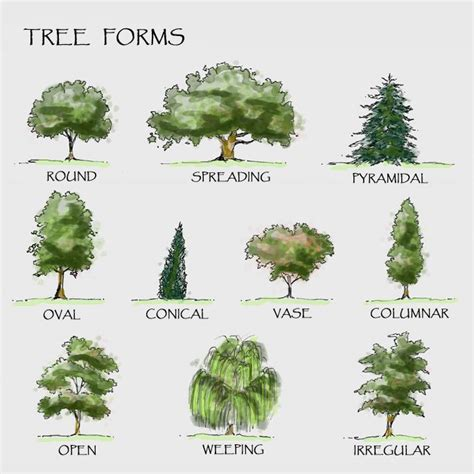 type of trees best 25 landscape architecture drawing ideas on