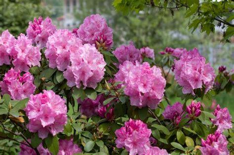 Der Garten Mehrzahl by Rhododendron Garten