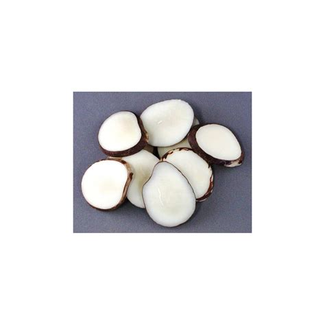 tagua nut tagua nut slices tagua nuts for craft projects