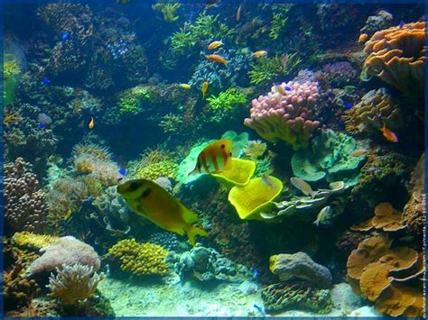 poissons de couleur jaune aquarium aquatique animal fond ecran image