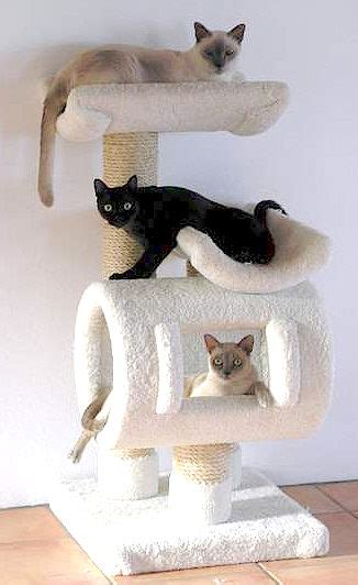 tree with cats pets cats cat health