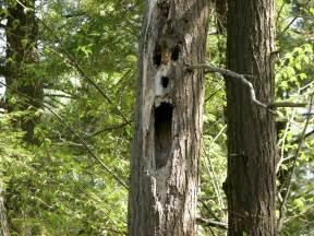tree horror top ten trees in horror popcorn horror