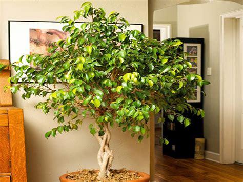 best plant for indoor low light best indoor plants for low light indoor trees low light
