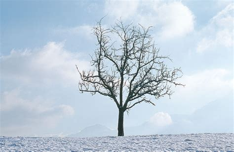 winter trees cathy spencer author ode to a winter tree