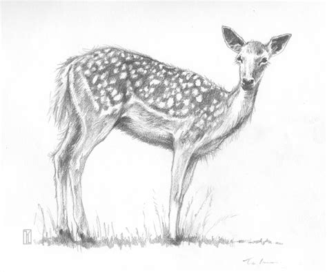 animals easy drawings of animals in pencil easy easy pencil