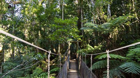 gold coast trees tree top walkway lamington national park destination