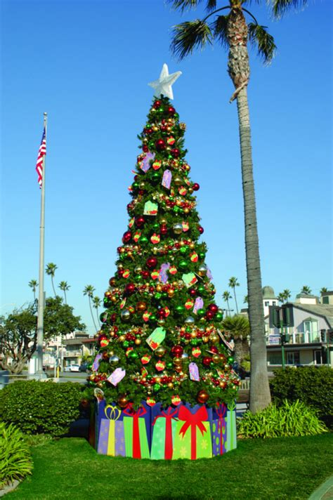 tree outdoor outdoor trees ideas for display and decor