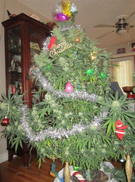 what a merry tree pot plants pictures man s tree is