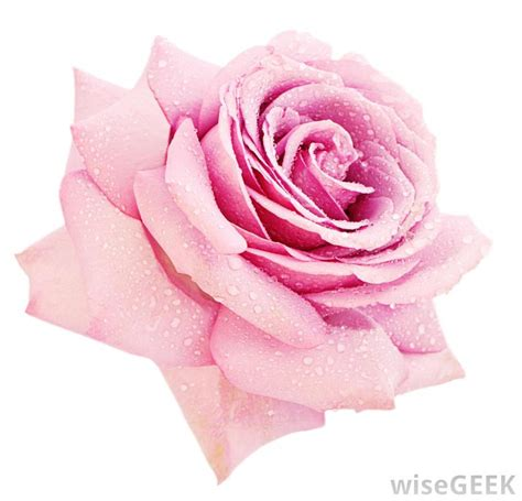 what do lights symbolize what do different colors of roses with pictures
