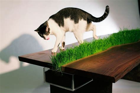 cat ideas 25 really cool cat furniture design ideas every cat owner