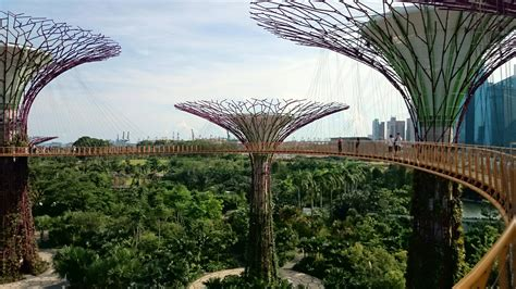 singapore tree gardens by the bay trees grove skyway