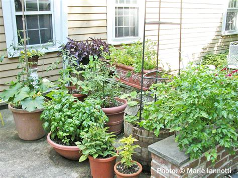 vegetable gardening in pots vegetable gardening in containers and small spaces