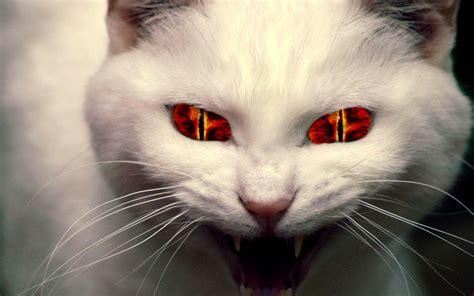 evil cat painting faites des cookies page 2
