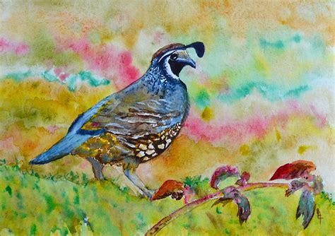 paint color quail california quail painting by beverley tinsley
