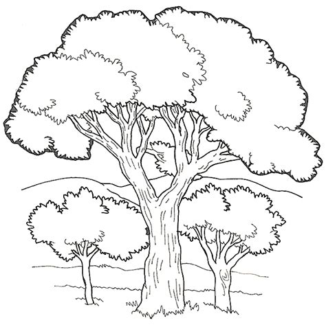 tree color in tree coloring book coloring home